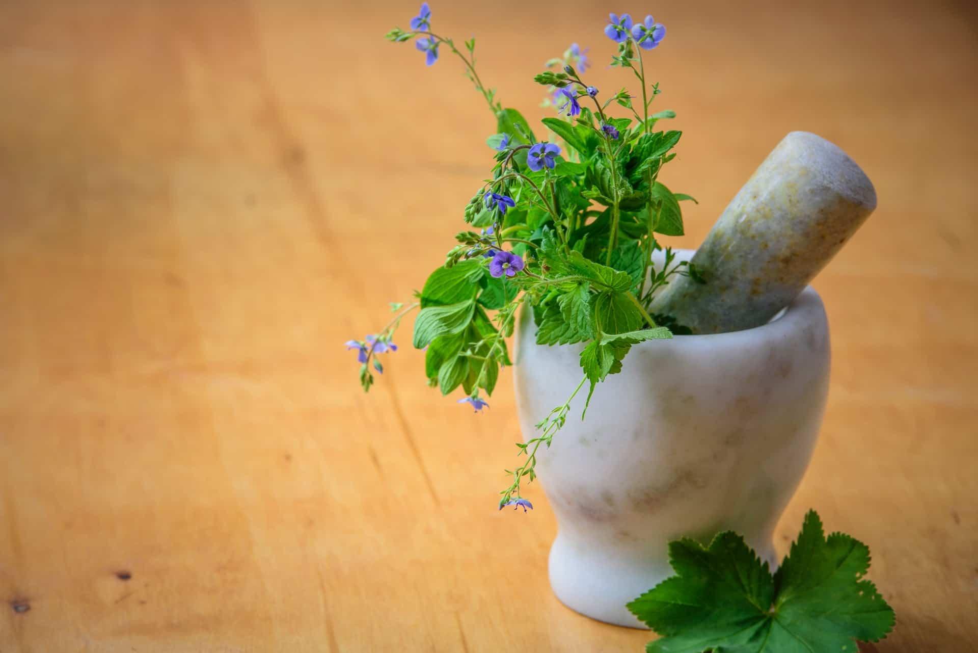 Pflanzenkunde vereint Tradition und High-Tech
